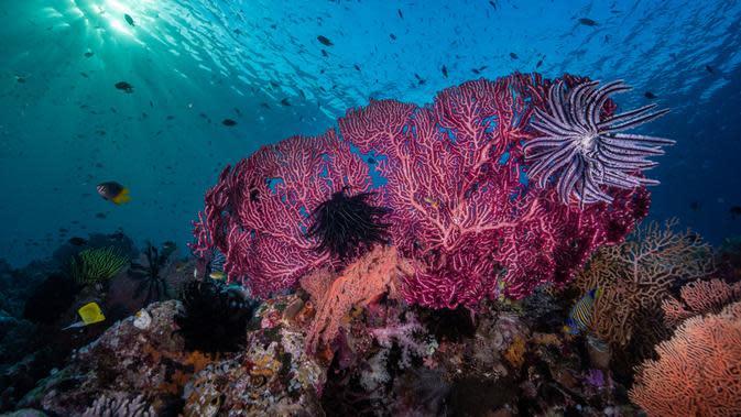 Penasaran indahnya bawah laut Wakatobi? (c)shutterstock
