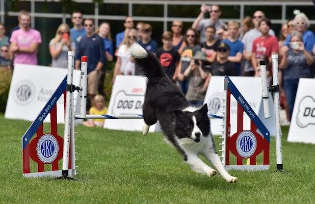 ESPN2 to Fill Programming Hole Caused by Coronavirus Sports Hiatus… With Puppies