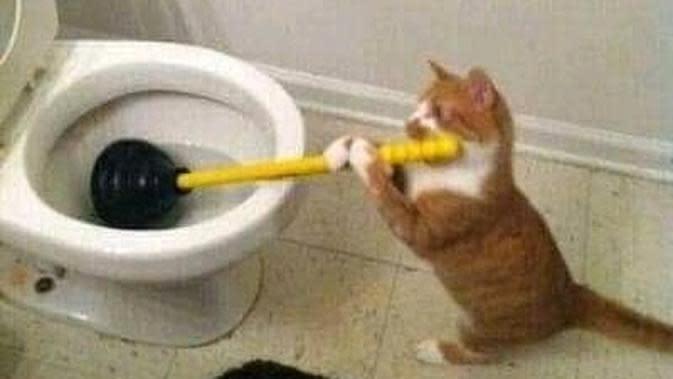 Kucing oranye lakukan pekerjaan rumah (Sumber: Instagram/sukakucing_idn)