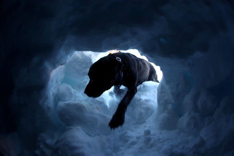 Anjing pelacak Swiss bersiap hadapi musim longsor salju mematikan
