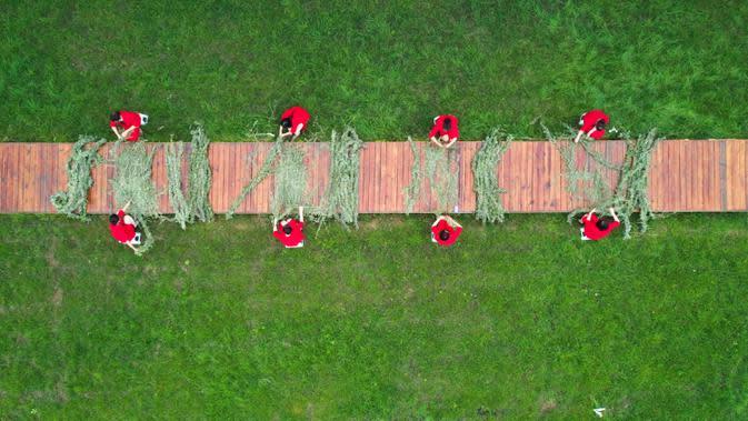 Foto dari udara penduduk desa yang tengah mengikuti lomba menenun tanaman apsintus dalam Festival Perahu Naga di Desa Huajiaoyuan, Provinsi Hebei, China, 25 Juni 2020. Festival Perahu Naga dirayakan secara tradisional pada hari kelima bulan kelima dalam kalender bulan China. (Xinhua/Liu Mancang)