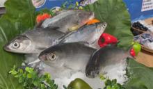 快新聞/食品外銷傳捷報! 沙國核准台灣23家水產業者輸入申請