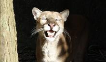 貓科動物你會分嗎?用「這5招」分辨