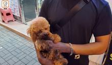警破寵物犬勒索案 天水圍拘涉案情侶救出貴婦狗