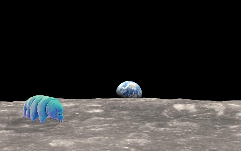 Thousands of Tardigrades Stranded on the Moon After Lunar Lander Crash