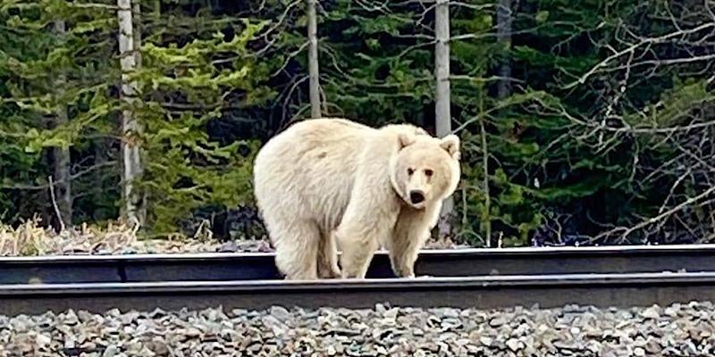 Photo credit: Bow Valley Facebook