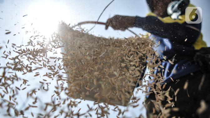 Aktivitas petani saat menggiling padi usai dipanen di persawahan kawasan Rorotan, Jakarta, Rabu (29/7/2020). Cadangan beras pemerintah (CBP) diprediksi mampu untuk memenuhi kebutuhan beras dalam negeri di tengah pandemi Covid-19, bahkan hingga akhir tahun 2020. (merdeka.com/Iqbal S. Nugroho)