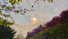 楓紅美景現在就看的到!太平山紫葉槭一路展葉到9月