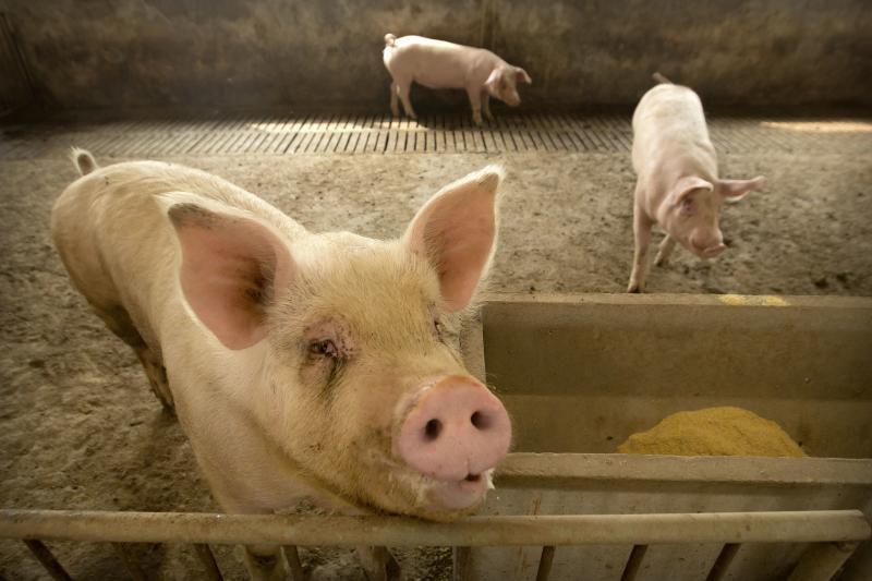 Harga daging babi yang melonjak membuat inflasi China tertinggi dalam tujuh tahun