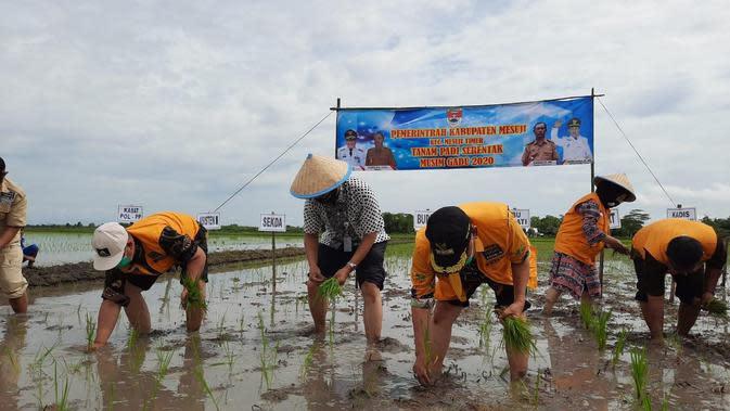 Kabupaten Mesuji diharapkan dapat menambah sumbangan produksi padi.