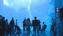 遭控水母斷肢.鯊魚撞壁 Xpark:民眾使用閃光燈