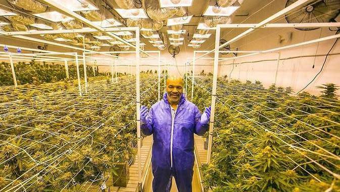 Mike Tyson di sebuah ladang ganja. (Dok. Give Me Sport)