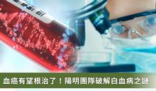 血癌關鍵原因找到了!陽明團隊:抑制特定蛋白有望根治白血病
