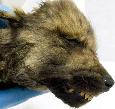 Ele não parecia estar em perigo quando morreu (Foto: Reprodução/Siberian Times)