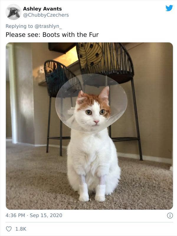 Potret Kucing Dengan Bulu Aneh Setelah Operasi, Bikin Geli. (Sumber: boredpanda)