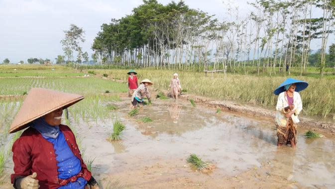 Dilema Pemerintah, Antara Kesejahteraan Petani dan Impor Pangan Demi Tekan Harga