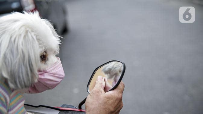 Seekor anjing menggunakan masker saat dibawa pemiliknya berkeliling di Jakarta, Selasa (12/5/2020). Masker yang dipasangkan oleh pemiliknya tersebut untuk melindungi anjing dari polusi udara serta mengantisipasi tertular virus corona COVID-19. (Liputan6.com/Faizal Fanani)