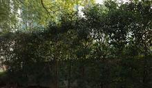 國共合作遺跡 上海大學紀念碑 (圖)