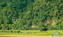 花蓮南安祕境 遇見沒有觀光人潮的超清幽「小金城武樹」