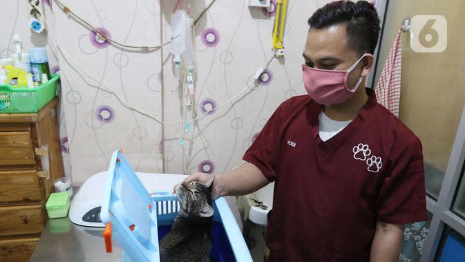 Petugas mempersiapkan operasi sterilisasi kucing di Klinik Hewan, kawasan Tebet, Jakarta, Senin (21/9/2020). Kegiatan itu dalam rangka menyambut Hari Rabies Sedunia (World Rabies Day) pada 28 September 2020 mendatang dan untuk menekan pertambahan populasi kucing liar. (Liputan6.cm/Herman Zakharia)