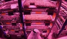 杜拜綠色革命確保糧食安全 垂直農場矗立沙漠