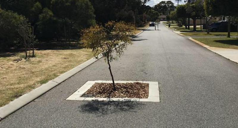 Trees have been planted on Inaloo roads in Perth to reduce traffic. Image: Facebook/Pauly Marlo
