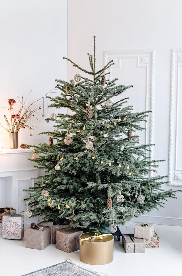 """<p>According to the<a href=""""https://www.christmastreeassociation.org/america-is-not-divided-on-one-issue-christmas-trees-continue-toincrease-their-festive-hold-on-the-holiday-season/"""" target=""""_blank""""> American Christmas Tree Association</a>, about 95 million households in the U.S. will put up a Christmas tree (or two) this year. The tradition of decorated trees can be traced back to <a href=""""https://www.history.com/topics/christmas/history-of-christmas-trees#:~:text=Germany%20is%20credited%20with%20starting,candles%20if%20wood%20was%20scarce."""" target=""""_blank"""">Germany in the 16th century</a>. It's said that Protestant reformer Martin Luther first thought to add candles to decorate the branches with light after being inspired by the sight of stars twinkling through the evergreens while walking home one winter's night. Queen Victoria and her German husband Prince Albert <a href=""""https://www.townandcountrymag.com/society/tradition/a25619292/queen-victoria-prince-albert-christmas-tree-holiday-tradition/"""" target=""""_blank"""">popularized the Christmas tree</a> with their own displays in the 1840s and the tradition found its way to the U.S., too. The <a href=""""https://web.extension.illinois.edu/trees/facts.cfm#:~:text=The%20first%20Christmas%20tree%20retail,trees%20from%20Michigan%20to%20Chicagoans."""" target=""""_blank"""">first Christmas tree lot</a> popped up in 1851 in New York and the first tree appeared in the <a href=""""https://www.whitehousehistory.org/press-room/press-backgrounders/white-house-christmas-traditions#:~:text=The%20first%20known%20Christmas%20tree,candles%20for%20the%20Harrison%20grandchildren."""" target=""""_blank"""">White House in 1889</a>. </p>"""