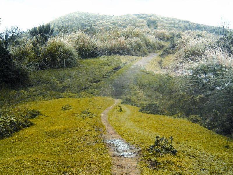 頂山石梯嶺步道