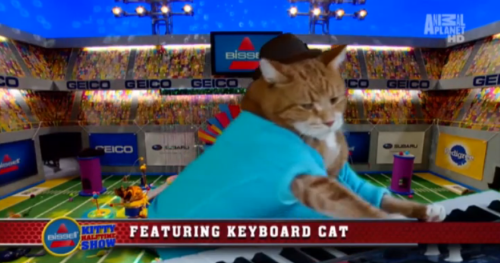 What to Expect From Keyboard Cat's Puppy Bowl Halftime Show