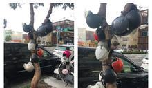 新竹特有種?結實累累「安全帽樹」