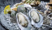 享受美食也能偽出國 勝博殿熱銷十四年「廣島牡蠣」強勢回歸