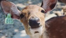 到小奈良餵食梅花鹿!全台20親子動物農場超萌來襲