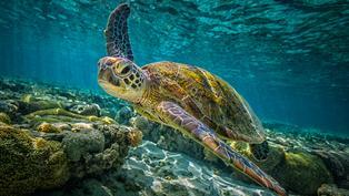 「自然界百歲人瑞」綠蠵龜 卻敵不過海洋垃圾的衝擊!|年度回顧專題
