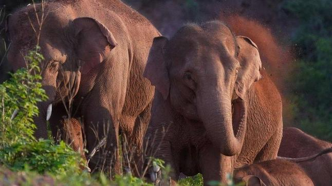 https://news.yahoo.com/elephants-500km-trek-across-china-230421448.html