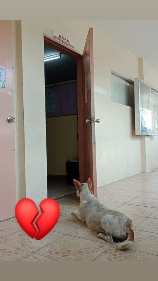 Buboy the dog waits outside the door of Carmelito Marcelo's classroom. The teacher died after suffering a stroke. Source: Facebook / Ma Kristina Paola Demafelix