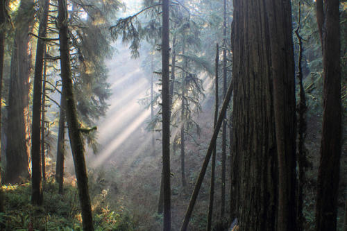 Flickr photo of the day: Jedediah's redwoods