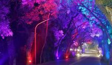 2021集集燈會23日開幕 綠色隧道晚間變黃金光廊