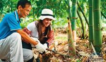 跟著「筍」友採收麻竹筍 品嘗在地風味餐
