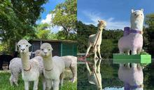 假日農莊體驗!全港首個「草泥馬天空之鏡」打卡位讓人樂而忘返