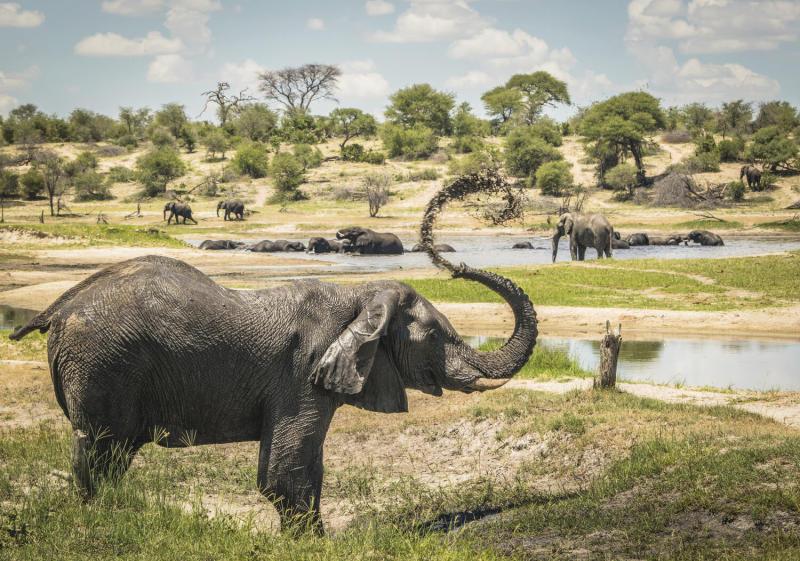 Elephant Grandfathers