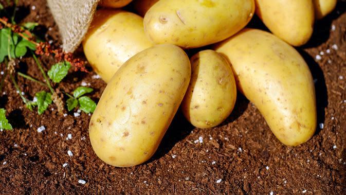 ilustrasi kentang tidak boleh dikonsumsi saat mentah/pexels