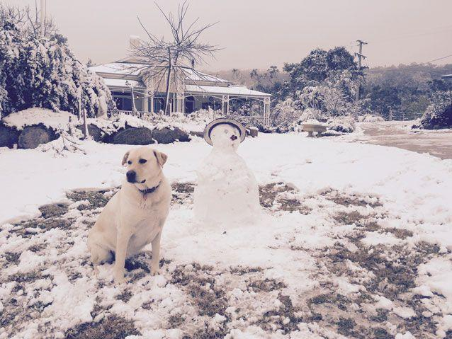 It's possible Stanthorpe could again be transformed into a winter wonderland. Source: AAP