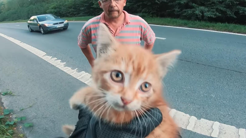An abandoned kitten was found on a busy road by two animal lovers. Photo: Youtube/Reazenn