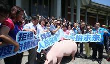 禁萊豬》北市食安自治條例修正三讀通過 販售萊豬將可處6萬元以上、10萬元以下罰款