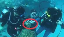 快新聞/畫面指證歷歷! 2潛客小琉球餵食海龜遭法辦