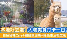 【本地好去處】大埔美食打卡一日遊 白色貨櫃Cafe+親親草泥馬+綠色生活概念店