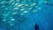 牛奶湖、水母湖潛水聖地 帛琉必訪6大景點