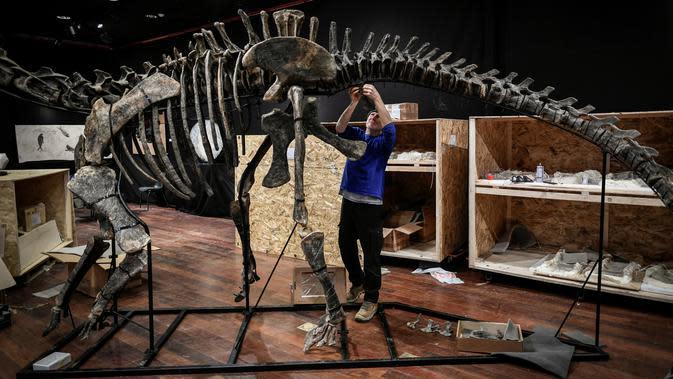 Seorang pakar asal Italia merakit kerangka dinosaurus, Diplodocus sebelum mulai dilelang di Balai lelang Drouot, Paris, Jumat (6/4). Bagi penggemar dinosaurus, pengumuman lelang ini mungkin akan menjadi kabar gembira. (STEPHANE DE SAKUTIN/AFP)