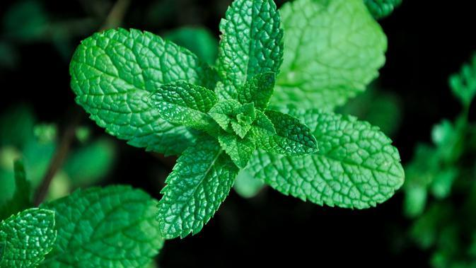 daun mint (sumber: Pixabay)