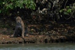 Kelompok lingkungan, perusahaan agrobisnis bersatu untuk Amazon di Brasil